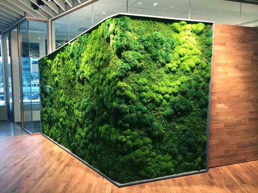 دیوار سبز ریحان
